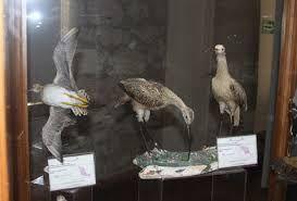 Resultado de imagen para museo de las aves