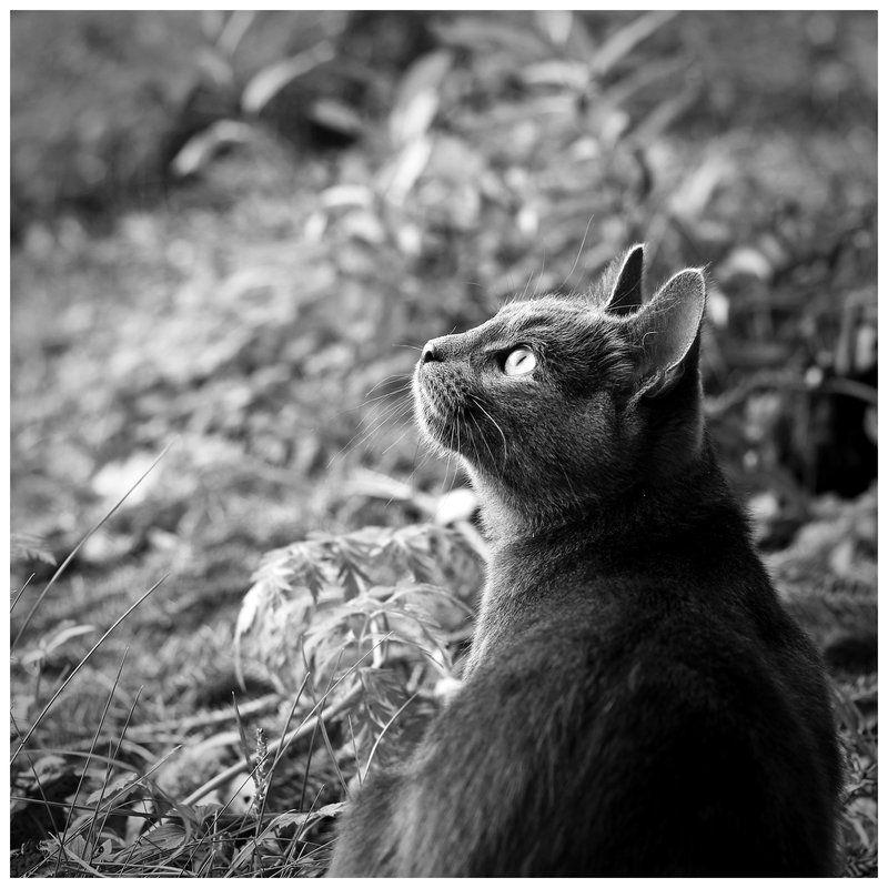 by ~Meow-pics