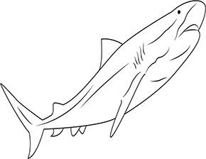 Ausmalbild Tigerhai In 2020 Ausmalen Ausmalbild Tigerhai