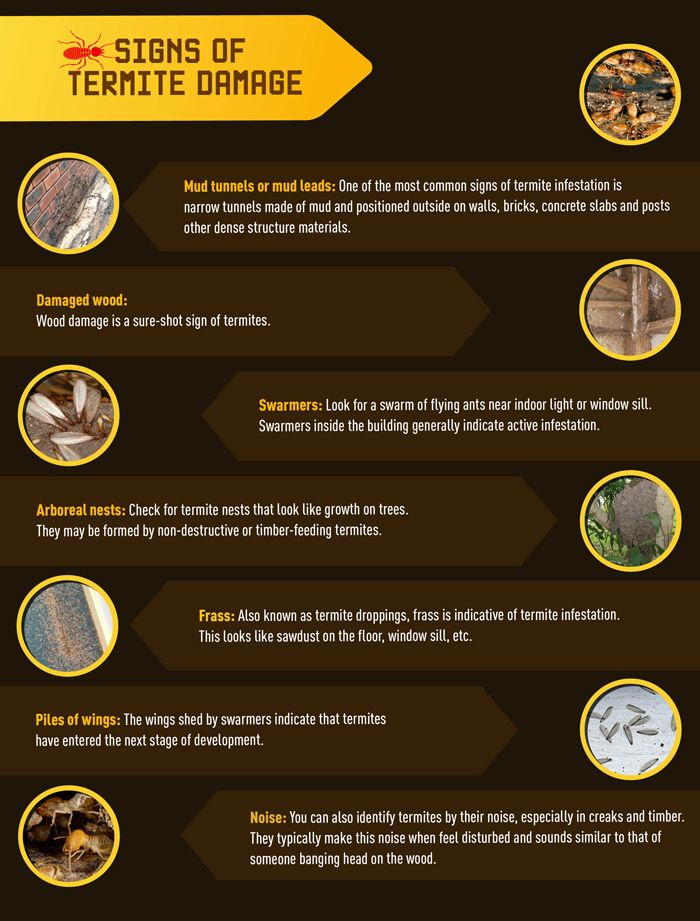 Your Home What Happens To Termites In The Winter Signs Of Termites Termite Damage Termites
