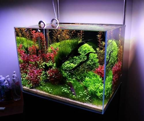 Pin By Jennifer Campbell On Aquascapes Nature Aquarium Aquarium Fish Tank Design