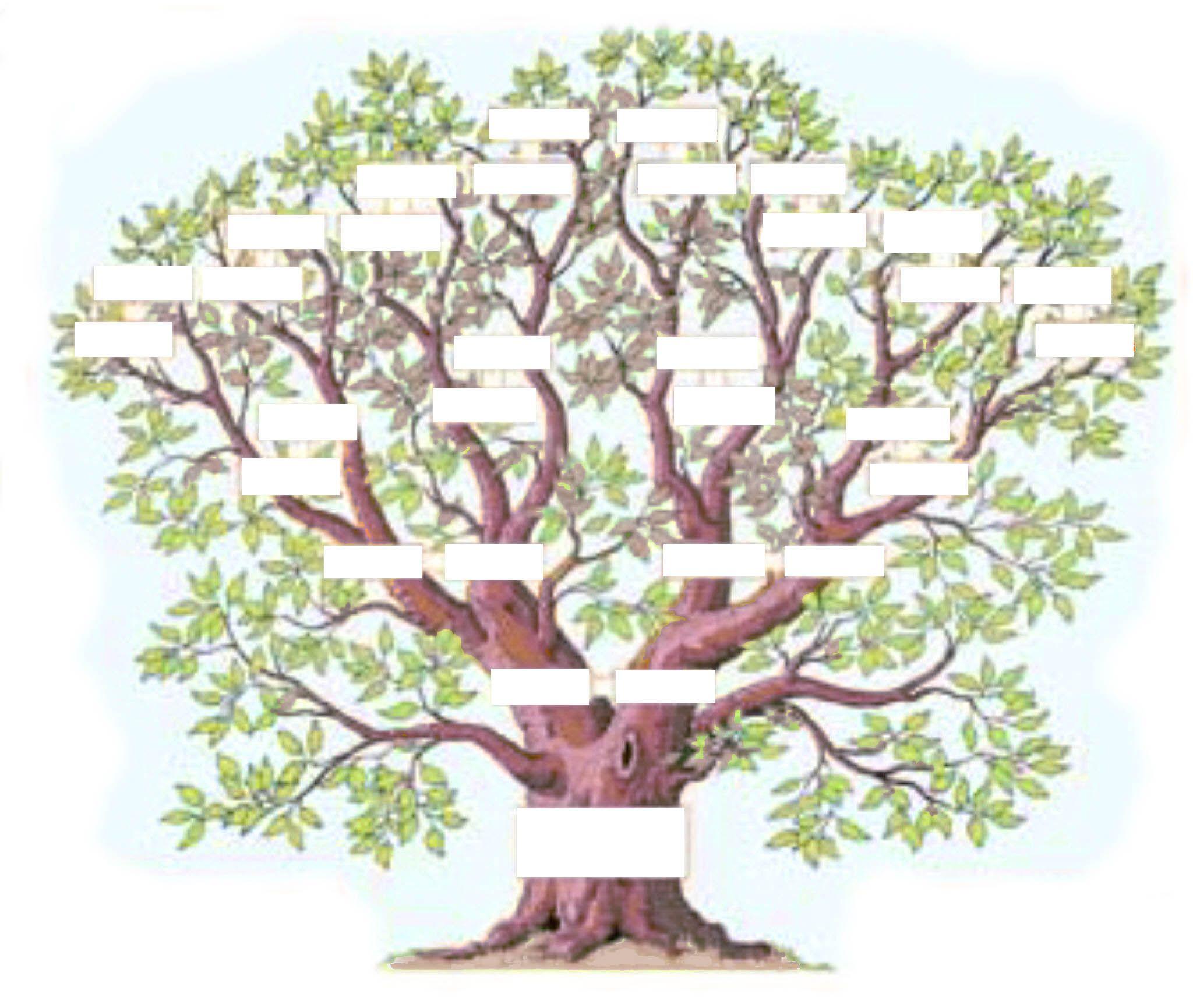 L Arbre Genealogique Exercice Art D Arbre Genealogique Arbre