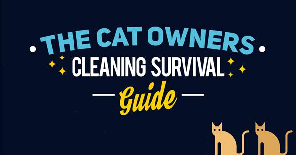 Learn how to get rid of stains your cat causes and any fur they leave behind!