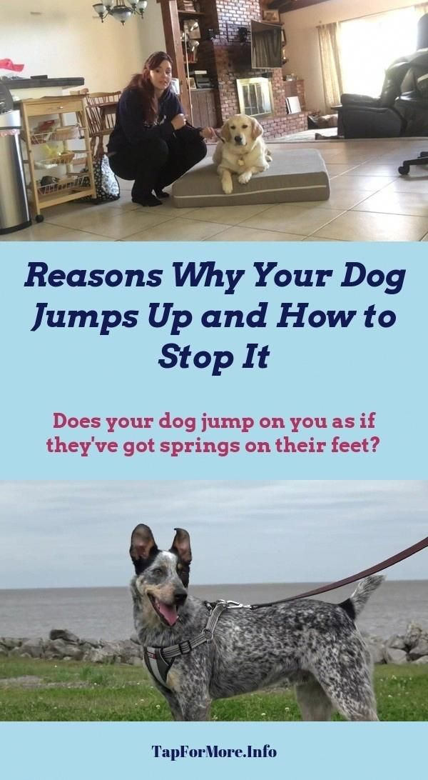 Stop Dog Jumping And Training Dogs Obedience Check The Pin For