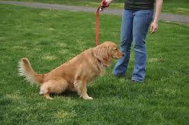 101 mascotas: Cómo enseñar a un perro a hacer sus necesidades en el lugar indicado