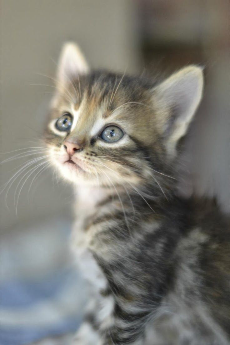 Name for sweet natured cat kitten Fluttershy Cricket Bunny