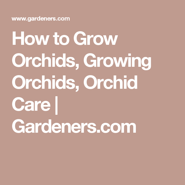 Pin On Orchids For Beginners 400 x 300
