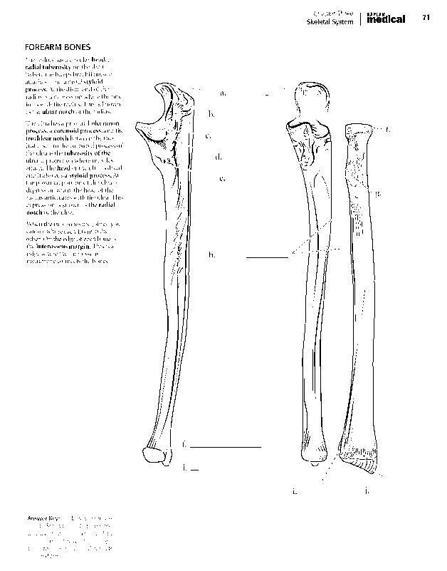 Kaplan Anatomy Coloring Book Pdf Boudli Anatomy Coloring Book