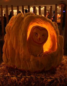 Barn owl carved pumpkin by Shawn Rairigh