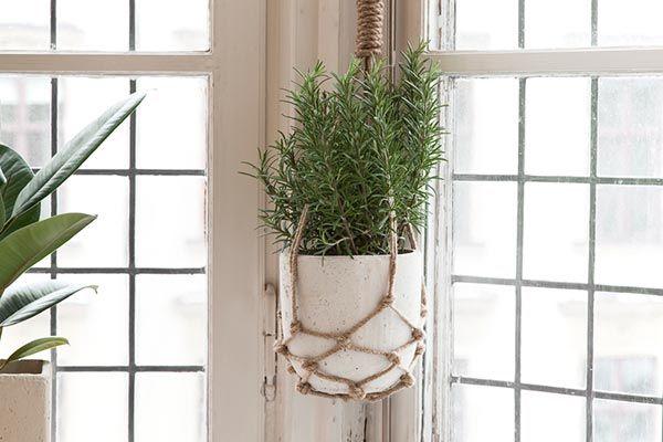 bloemen en planten in je interieur