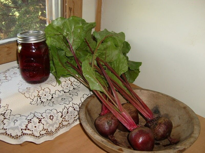Beets from growing and preparing to canning and cooking