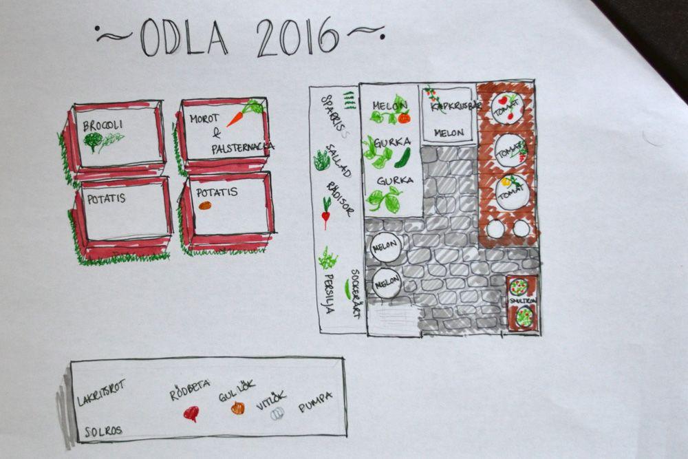 HojnaSandra - Odling – Pyssel – Lantliv – Trädgård – DIY
