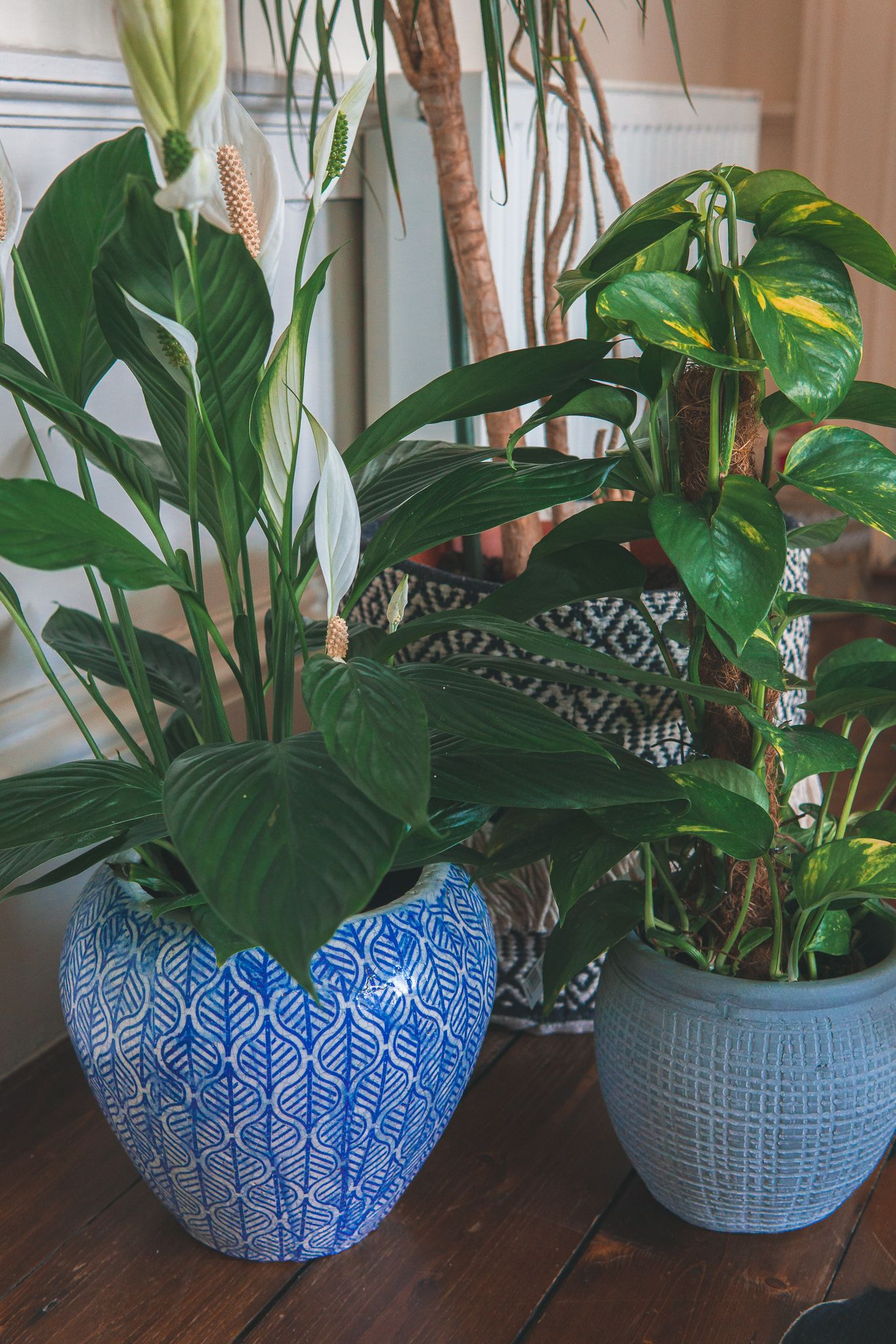 Houseplants To Bring Joy To Your Home A Model Moment In 2020 Houseplants Plants Peace Lily