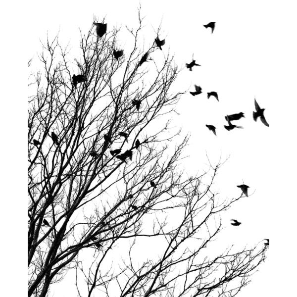 Calguisvectorhiver4119 Png Black And White Birds Flying Bird Silhouette Birds Flying