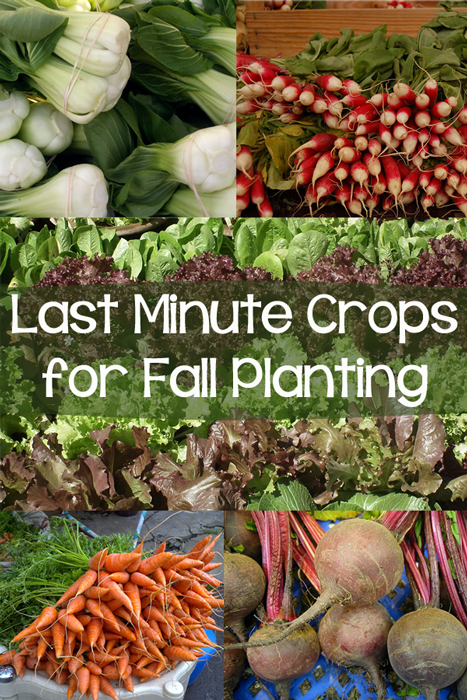 10+ Last Minute Crops to Plant Now for Fall Harvest