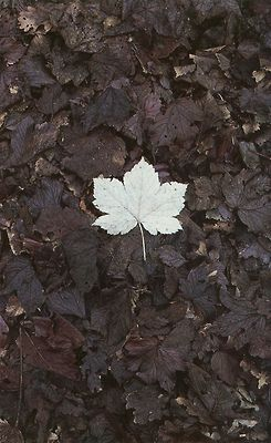 Fall Leaves by Old Chum