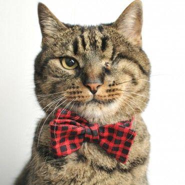collier noeud papillon pour chat rouge et noir