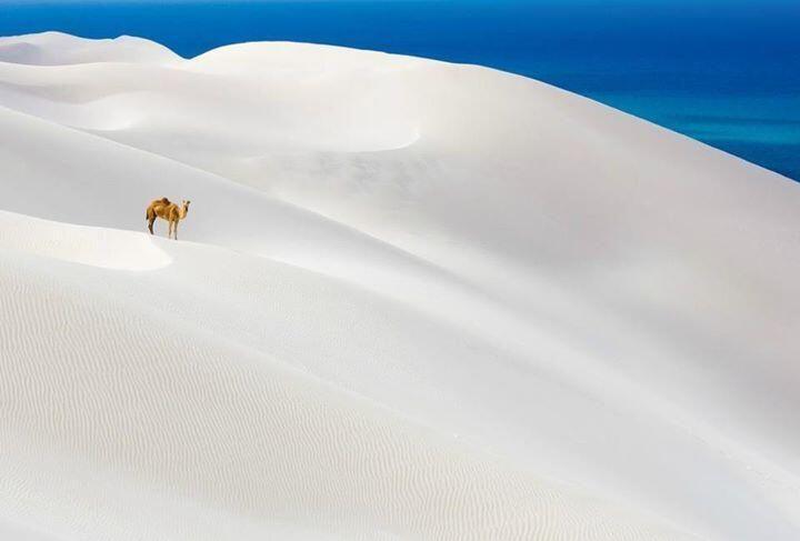 Socotra Island at Yemen. ...