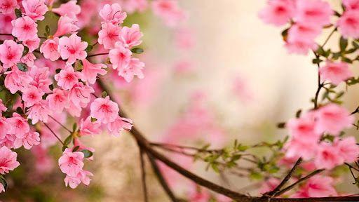 Resultado de imagen para fotos de flores de primavera ashley
