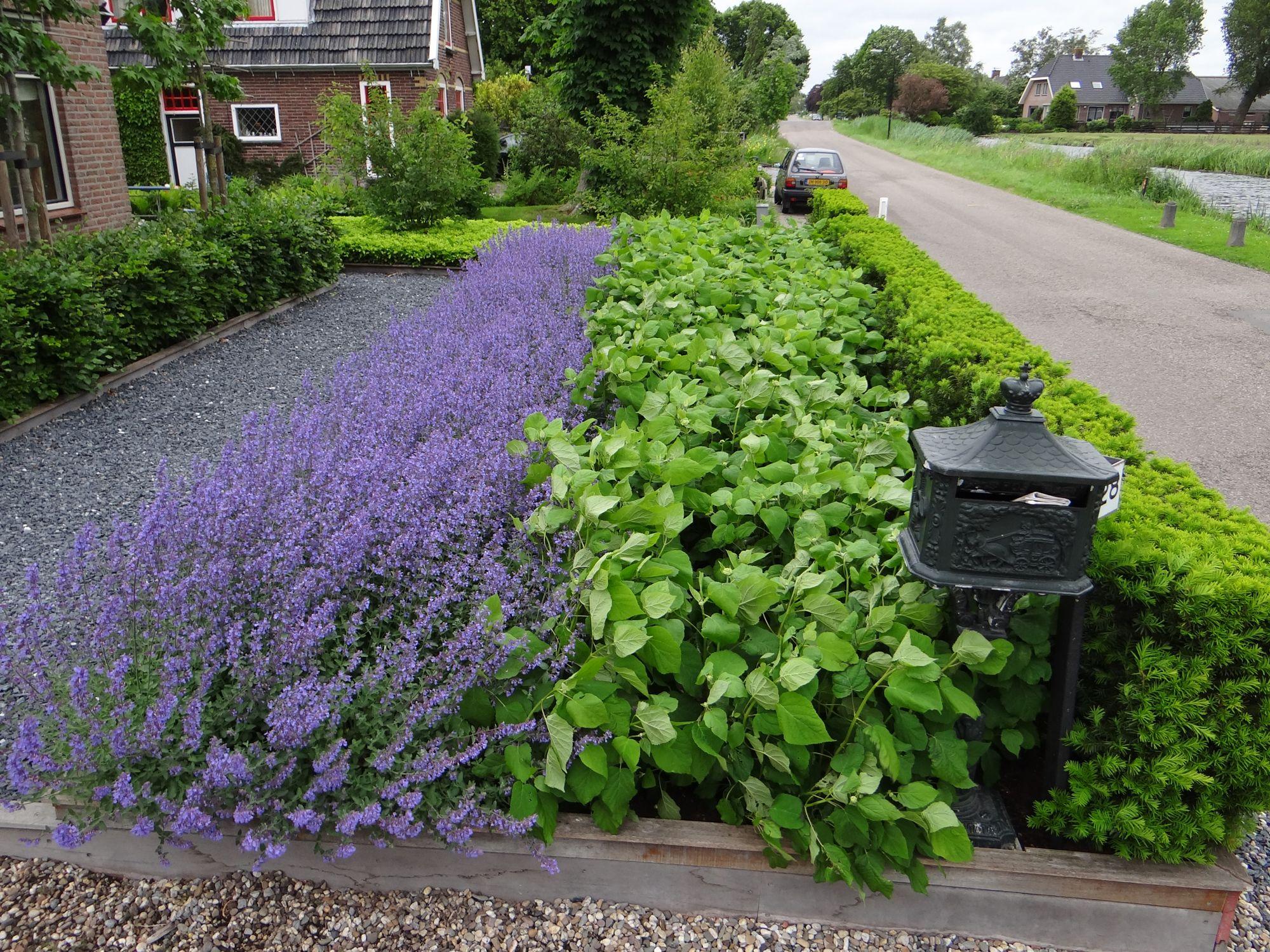 Strakke voortuin met mooie beplanting tuin pinterest for Mooie voortuinen foto s