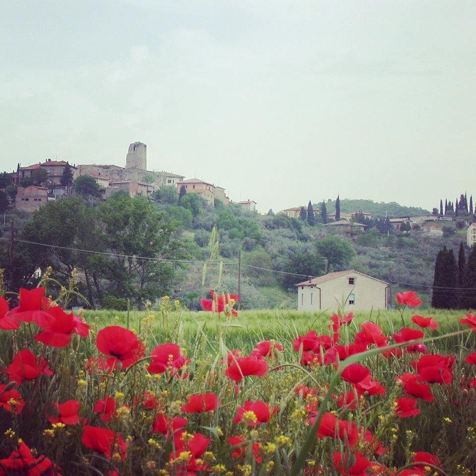 Mohnblumen In Der Toskana Red Poppy At Tuscany Mohn Mohnblume Rot Blumen Toskana Italien Poppy Coquelicot Red Flowers Tusca Toskana Mohnblume Mohn