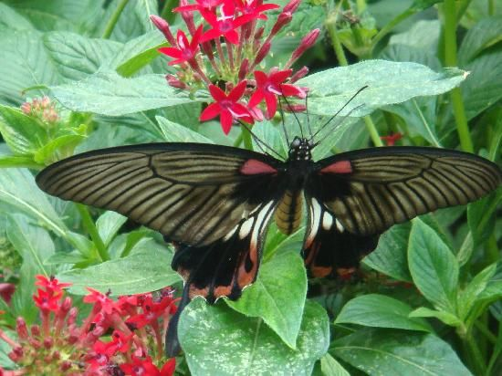 Charmant Butterfly Garden | Museum Of Science   Boston   Reviews Of Museum Of  Science .
