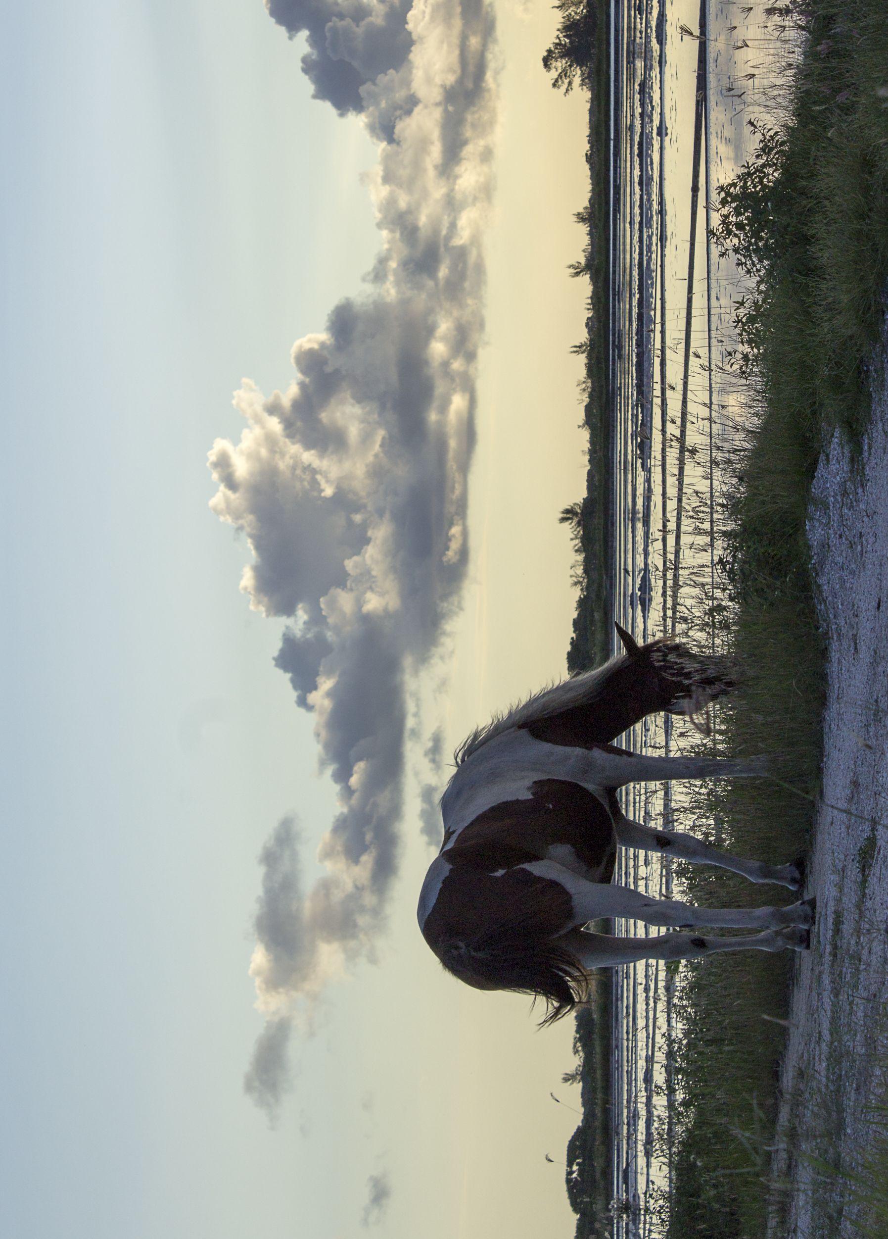 Salinas De Cabo Frio Cavalo Branco E Marrom Cavalos Brancos E