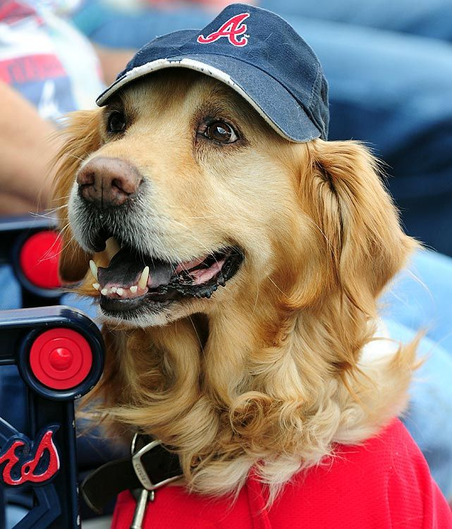 A Golden Retriever Attends A Ballgame At Turner Field As The