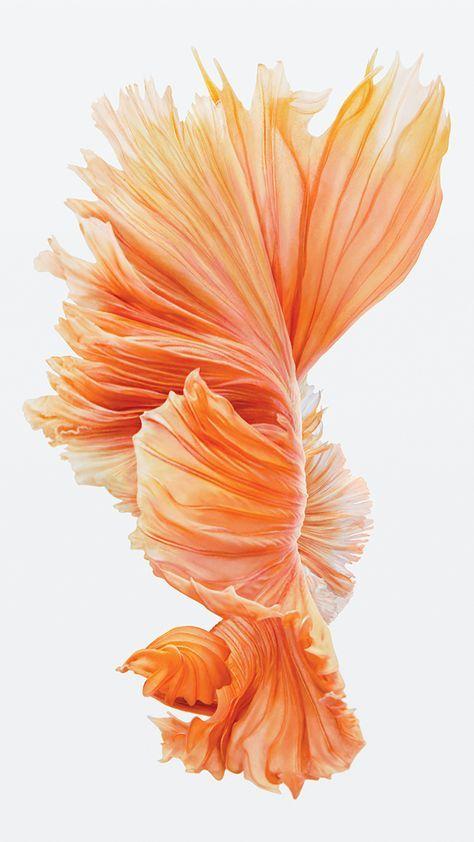 Iphone 6s Pink Fish Fondo De Pantalla