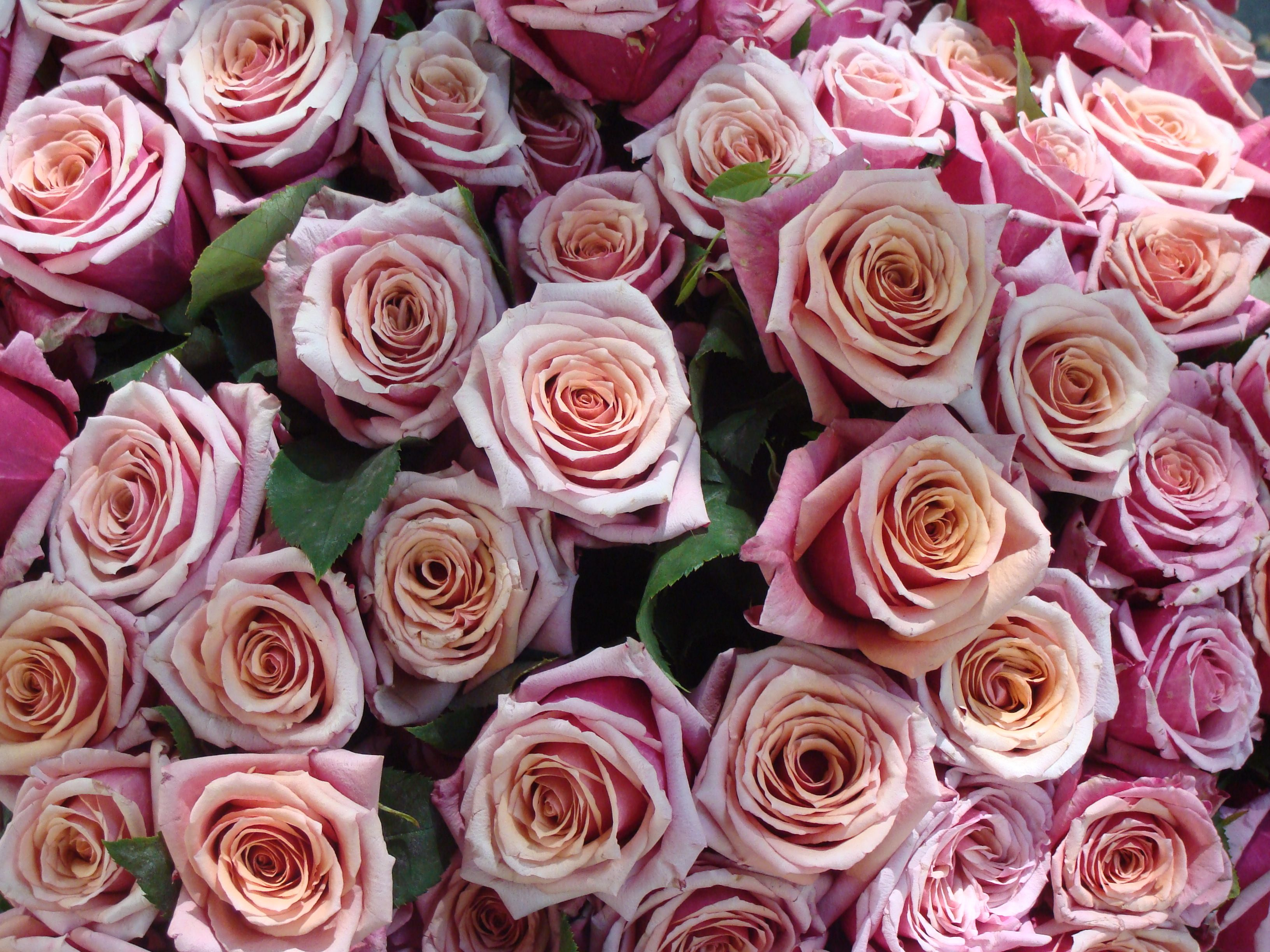 Google Image Result for http://upload.wikimedia.org/wikipedia/commons/0/00/Bouquet_de_roses_roses.jpg