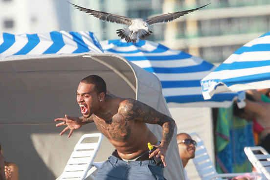 And Chris Brown, seen here being attacked by a seagull. | 27 People Having The Worst Summer Ever