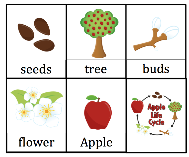 photograph relating to Apple Life Cycle Printable identified as Apple Lifetime Cycle Printable Apples Preschool apple topic