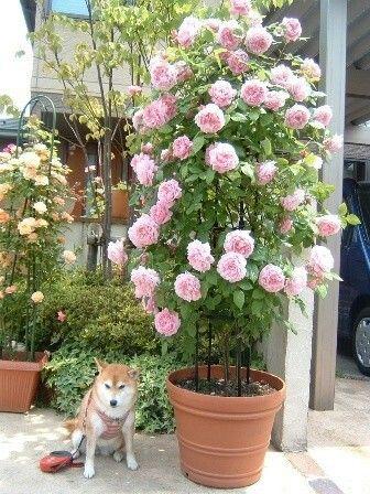 ... House Ideas, Hinterhof, Schattengarten, Blumen, Mehrjährige Pflanzen,  Töpfe, Blumen Pflanzen, Gärtnern, Pflanzen, Sukkulenten, Balkonkästen,  Terrasse