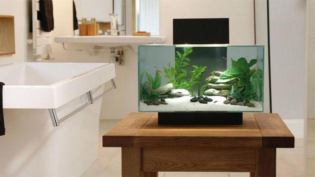 Modern Fish Tank Fish Tank Modern Fish Tank Aquarium