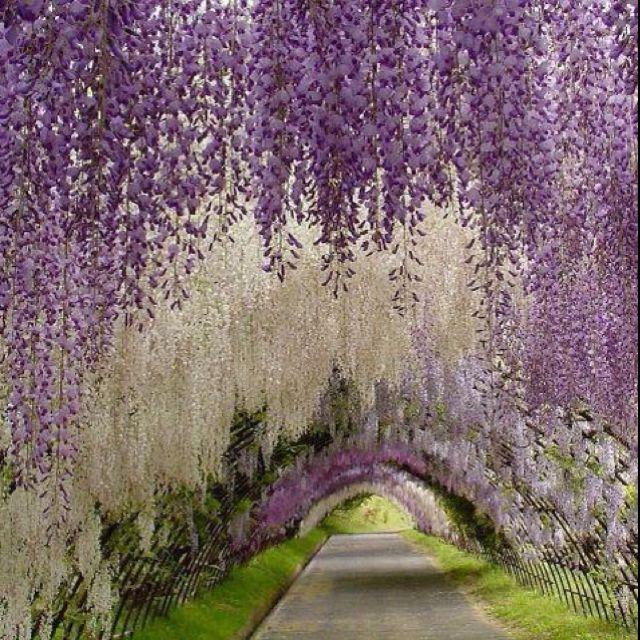 Hanging flowers, Japanese gardens