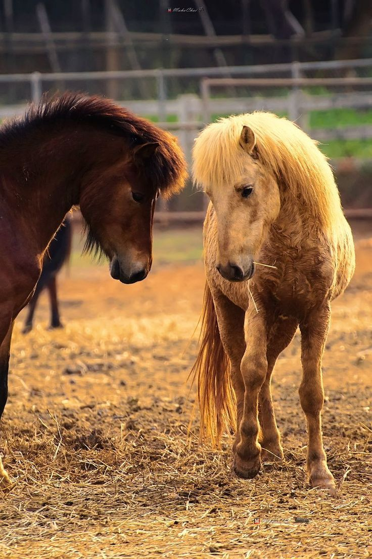 Pin by Kyla Henry on ☆.*・°☆ Ponies ☆.*・°☆ Horses
