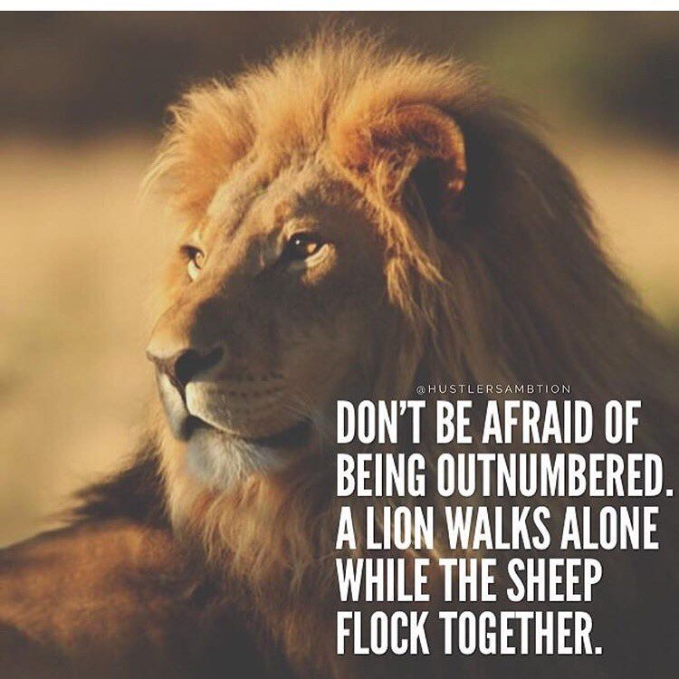 Pictures Of Lion With Diss Quotes
