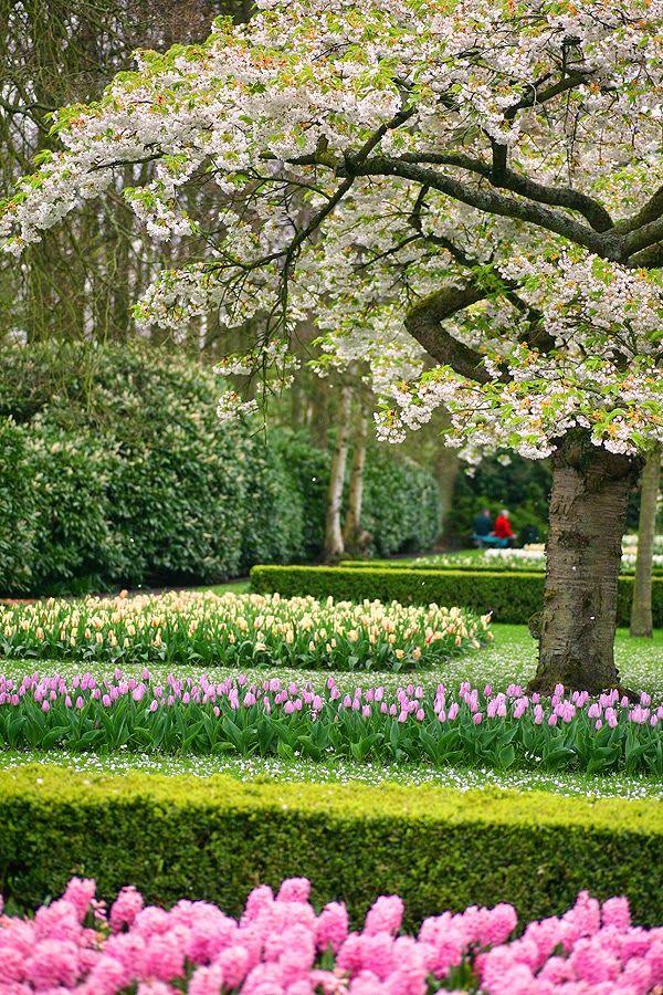 So Lovely in Spring ~ Keukenhof garden - Holand Tam gdzie mgły i róże mieszkają...