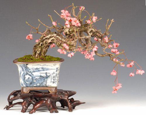bonsai bonsai shohin bonsai penjing pinterest. Black Bedroom Furniture Sets. Home Design Ideas