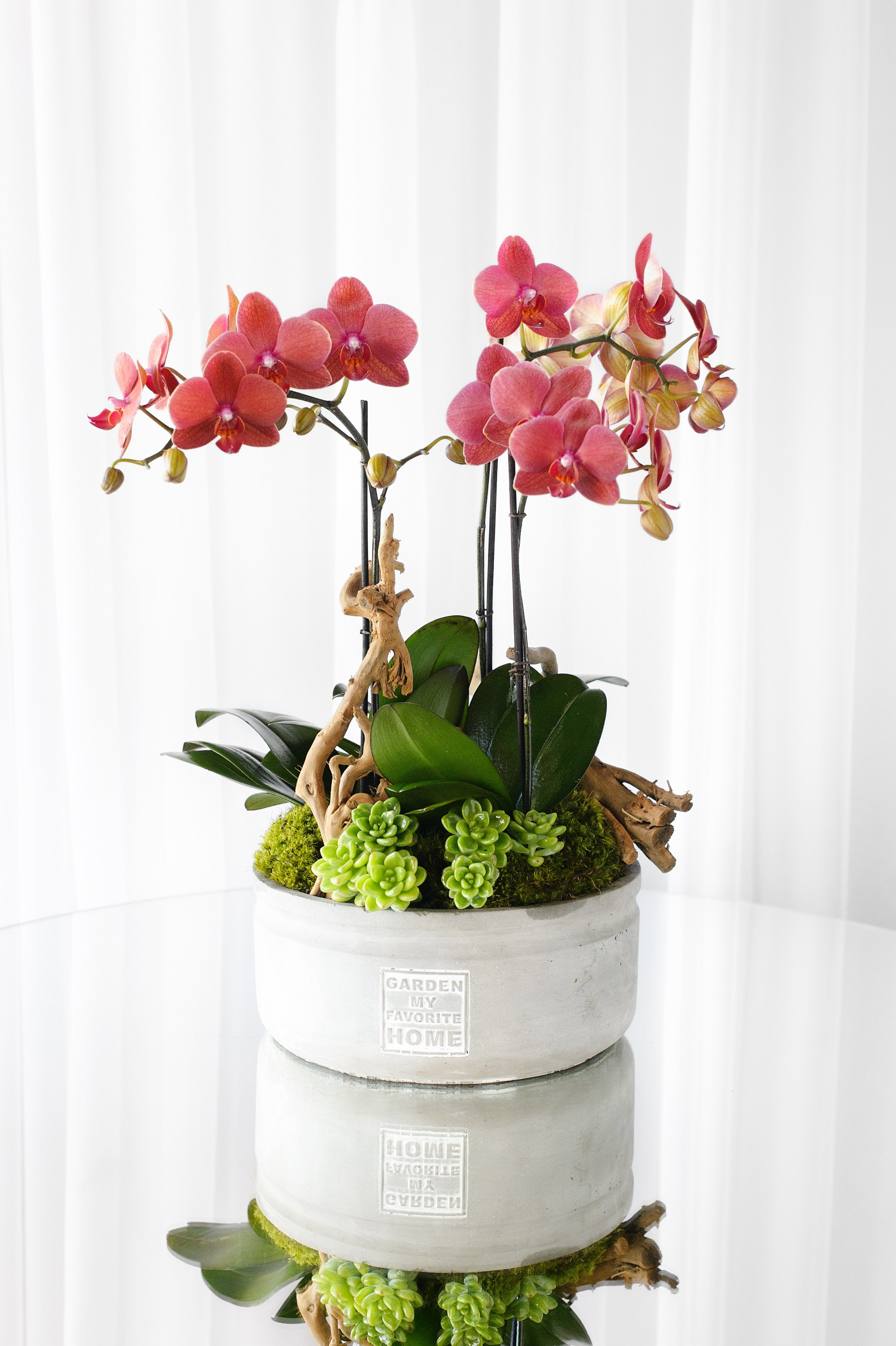 Spring Orchid In Los Angeles Ca The Hidden Garden Orchid Planters Orchid Flower Arrangements Orchids