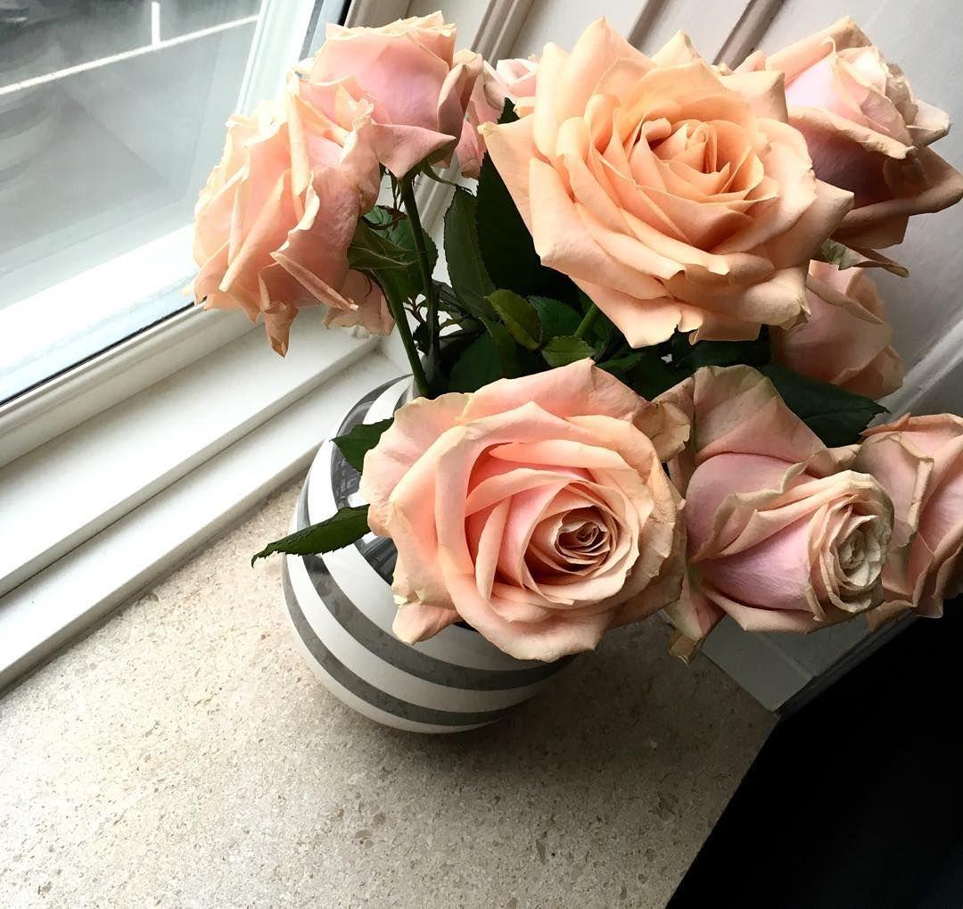 Flere blomster❄️ #roser#blomster#takminskat#lyserød#tirsdagmorgen#koldt#københavn#hjemme