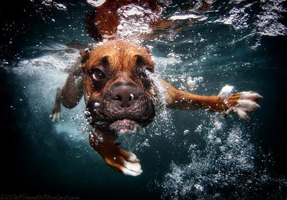 underwater dogs - Google Search