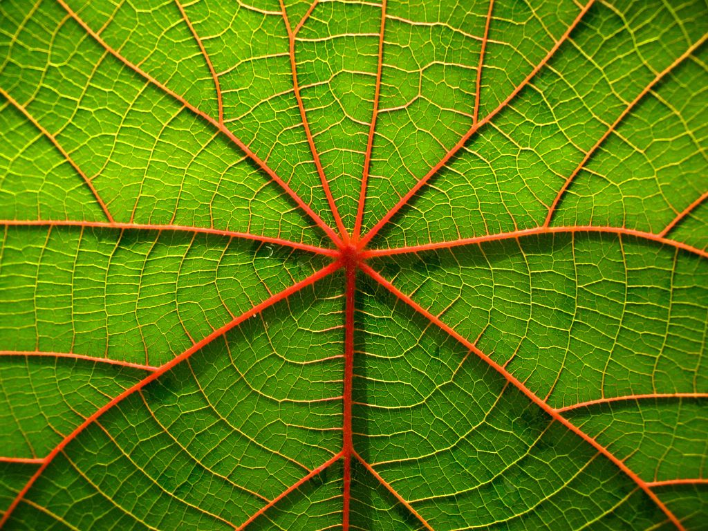 Branching Patterns Patterns In Nature Leaves Nature Inspiration