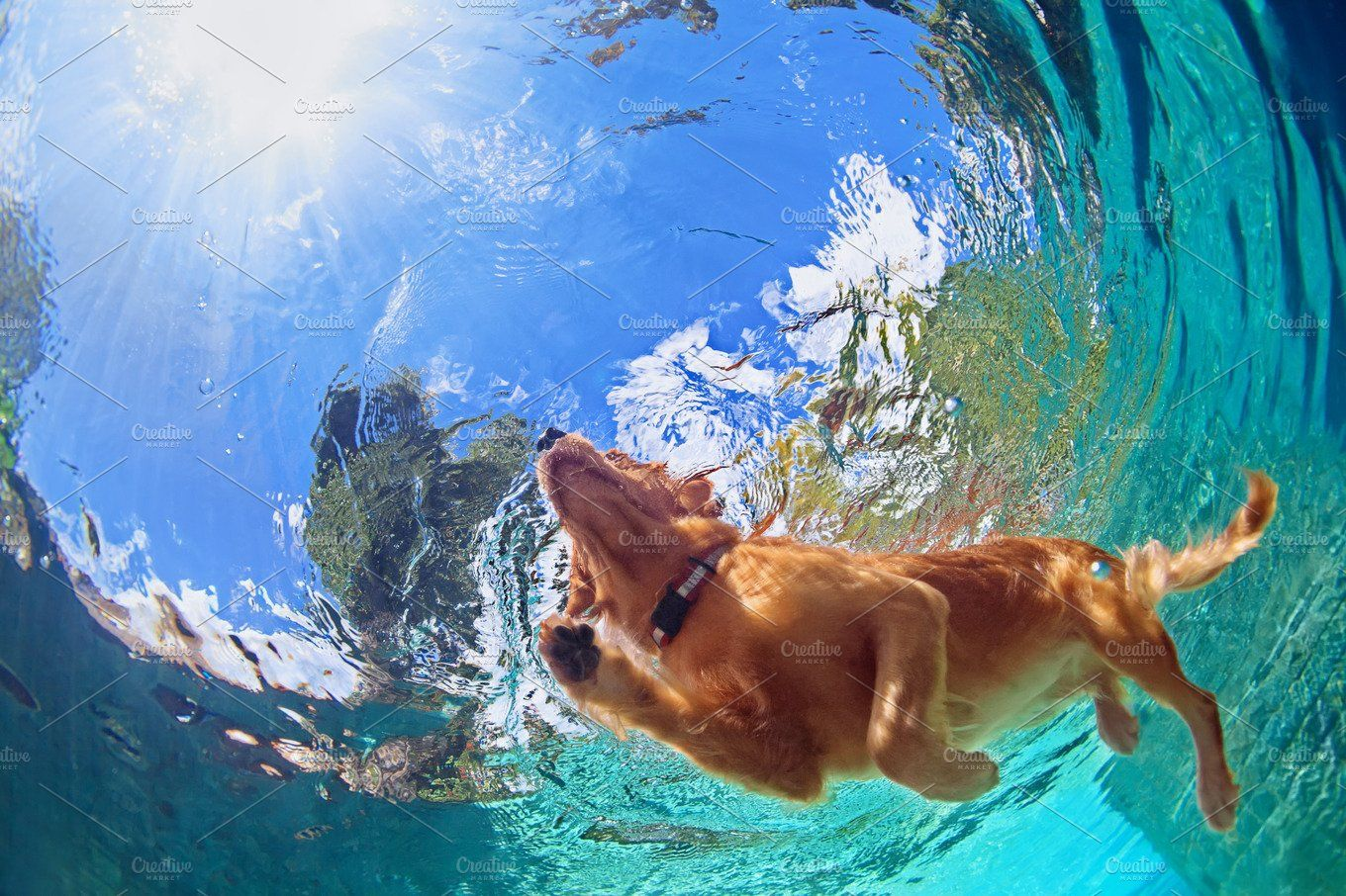 Swimming Dog By Tropical Studio On Creativemarket Road Trip