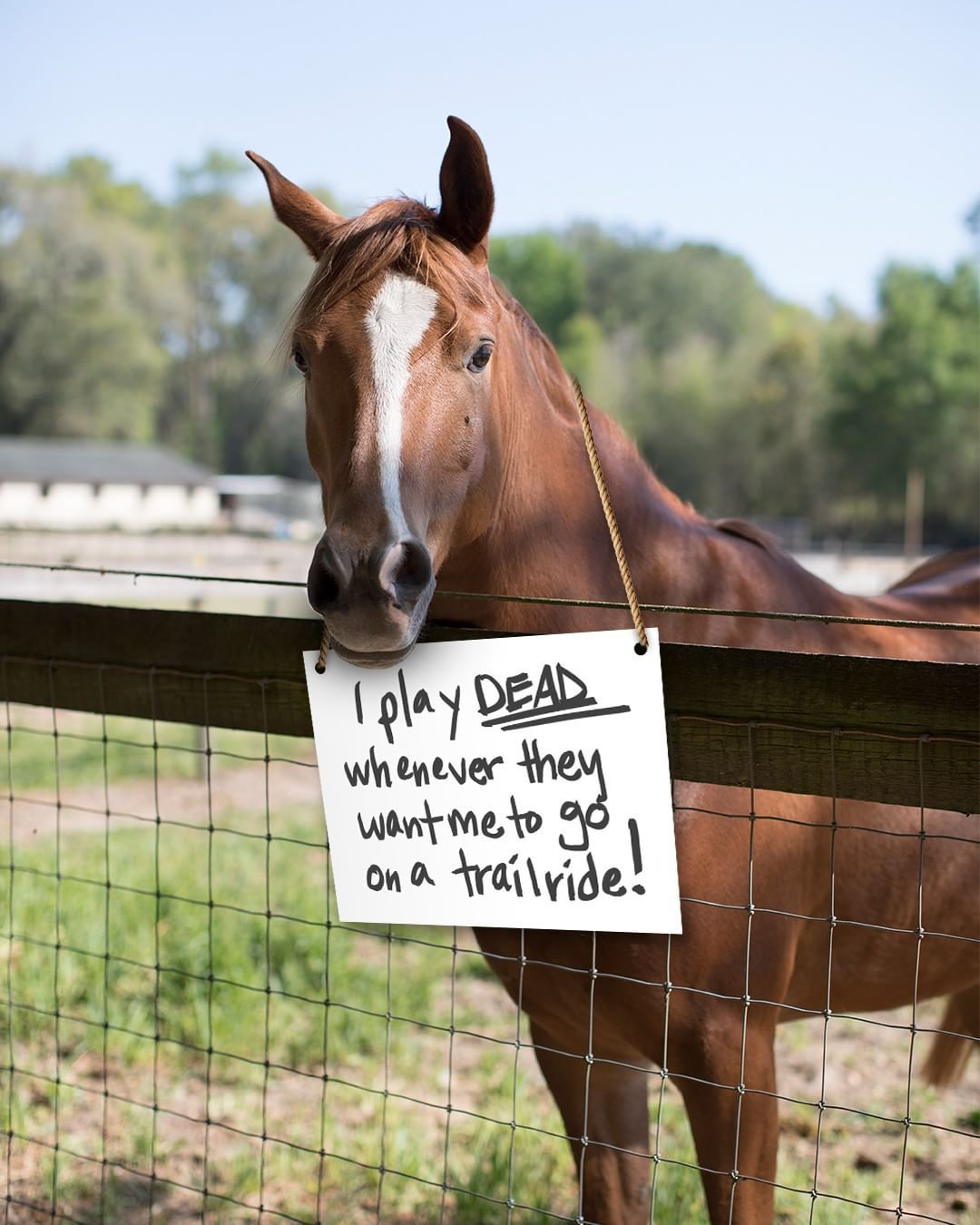 What does your horse do when they're naughty? #HorseShaming... #HorsesbeingHorses #PurinaFed #FeedGreatness #PurinaHorseFeed