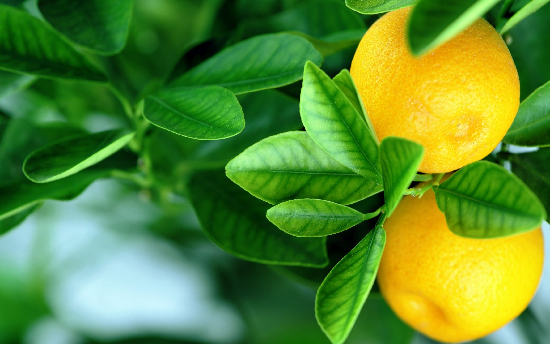 The Gaming Lemon Wallpaper | Lemon | Orange fruit, Orange ...