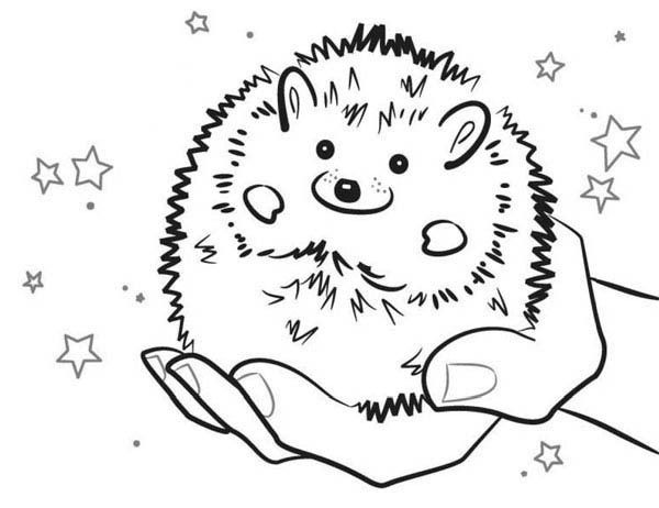 Image Result For Hedgehog Black And White Coloring Pages Baby