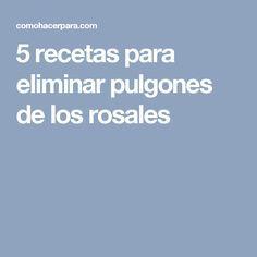 5 Recetas Para Eliminar Pulgones De Los Rosales Eliminar Pulgones Pulgon Eliminar