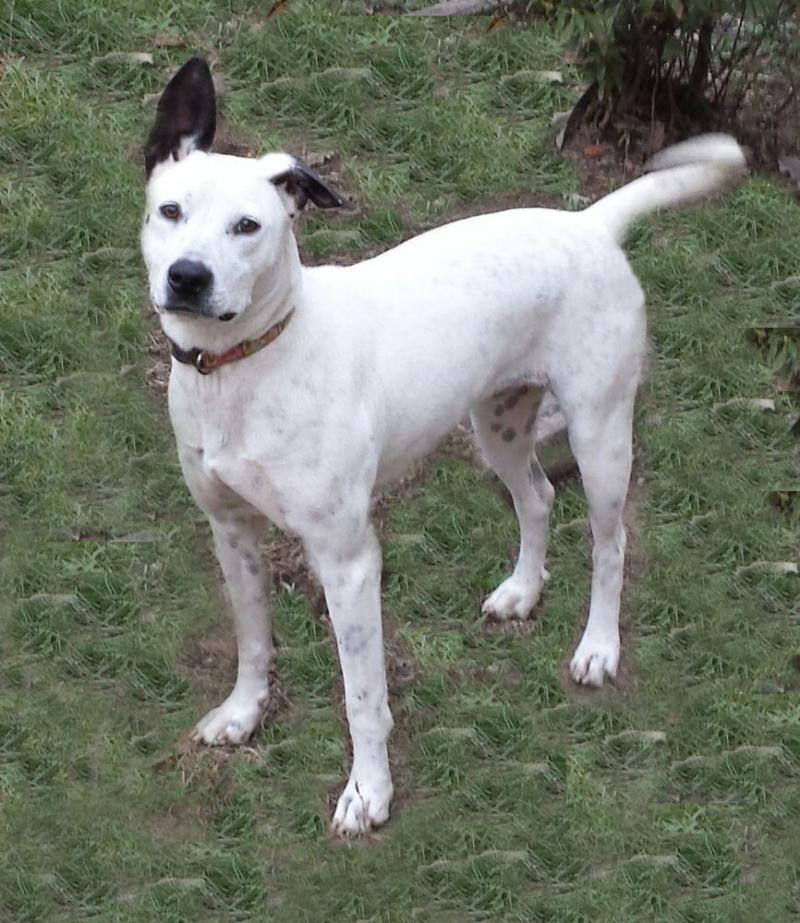 I found Lenita on (With images) Dog adoption, Animals
