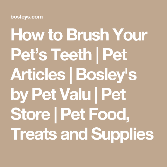 How To Brush Your Pet S Teeth Pet Articles Bosley S By Pet